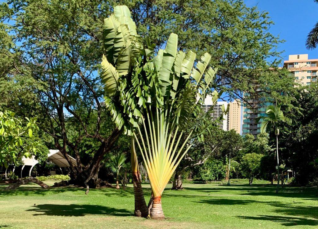 手のひらのような形をした植物