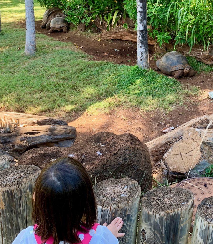 亀をみる娘