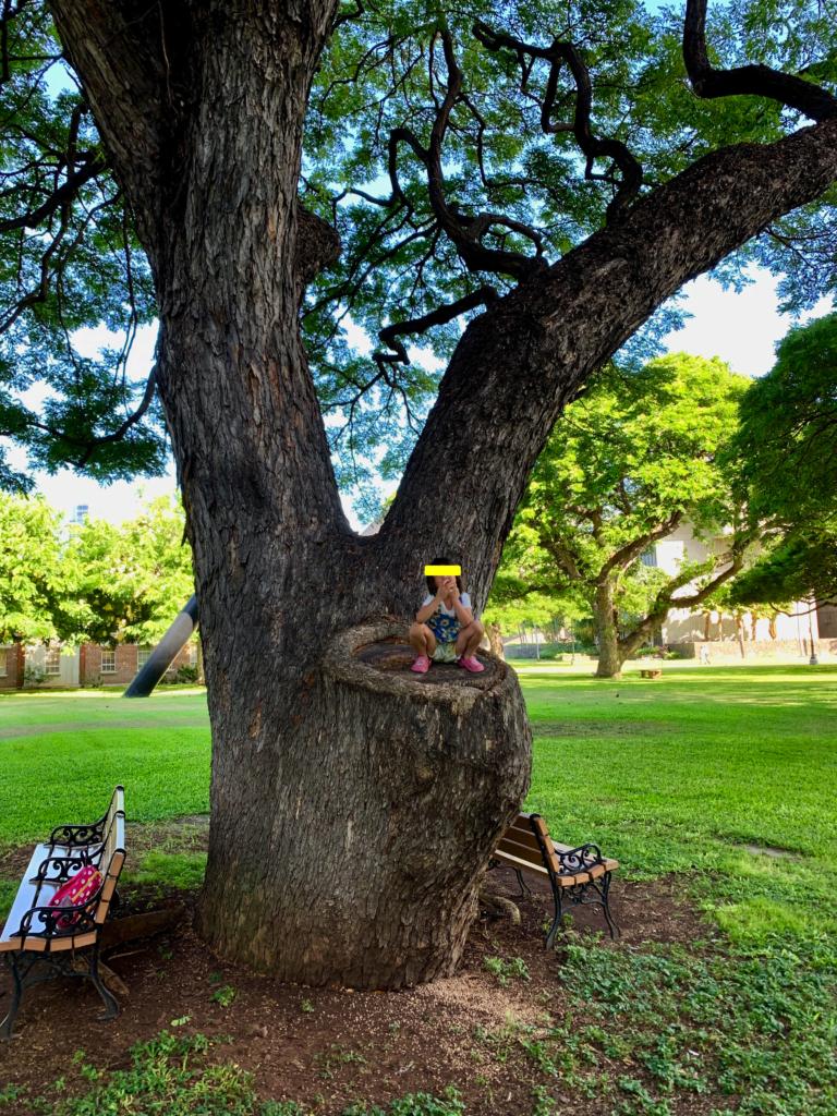 イオラニパラス近くの芝生の公園にある大きな木に登る娘。