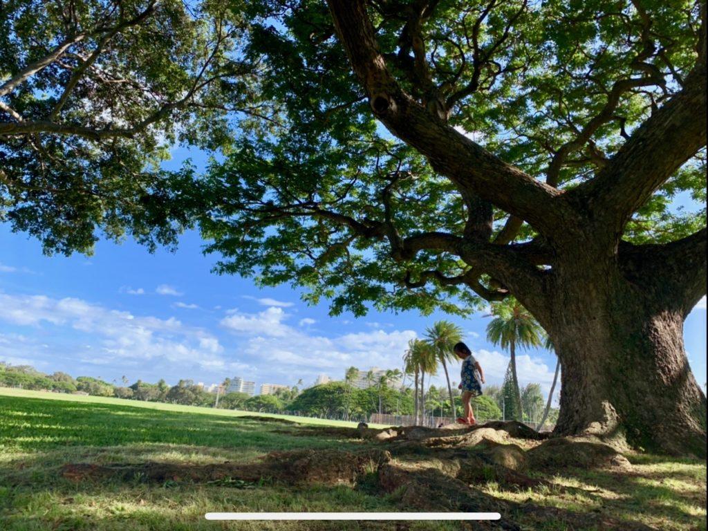 カピオラニ公園の木の下で遊ぶ娘