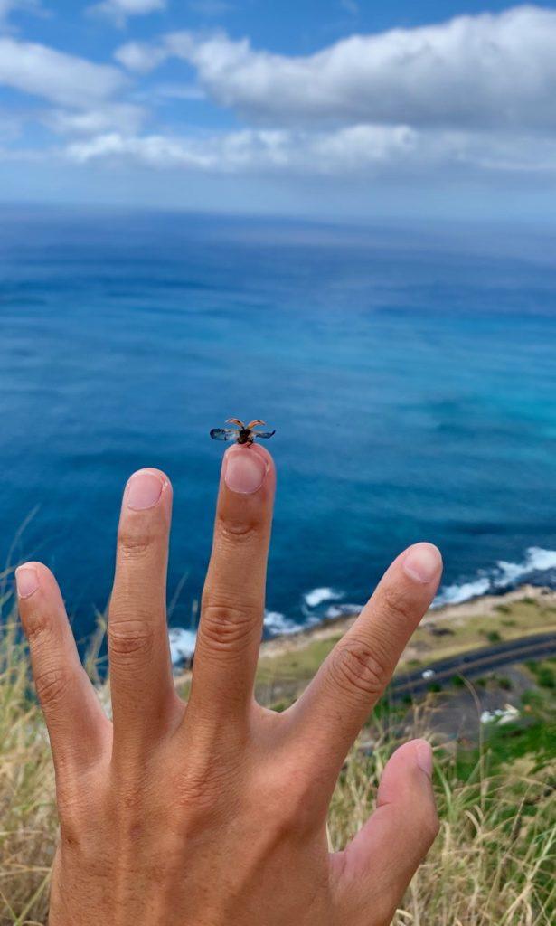手から飛び立つてんとう虫
