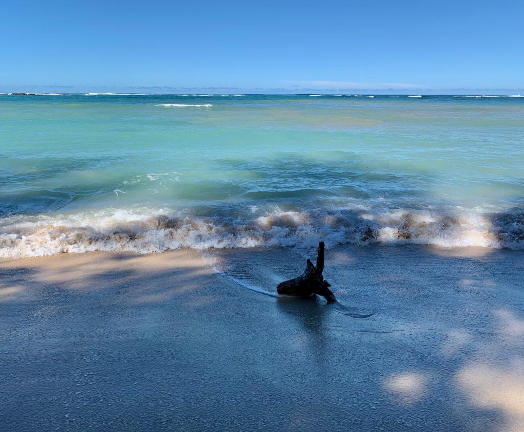 ビーチに漂着した流木