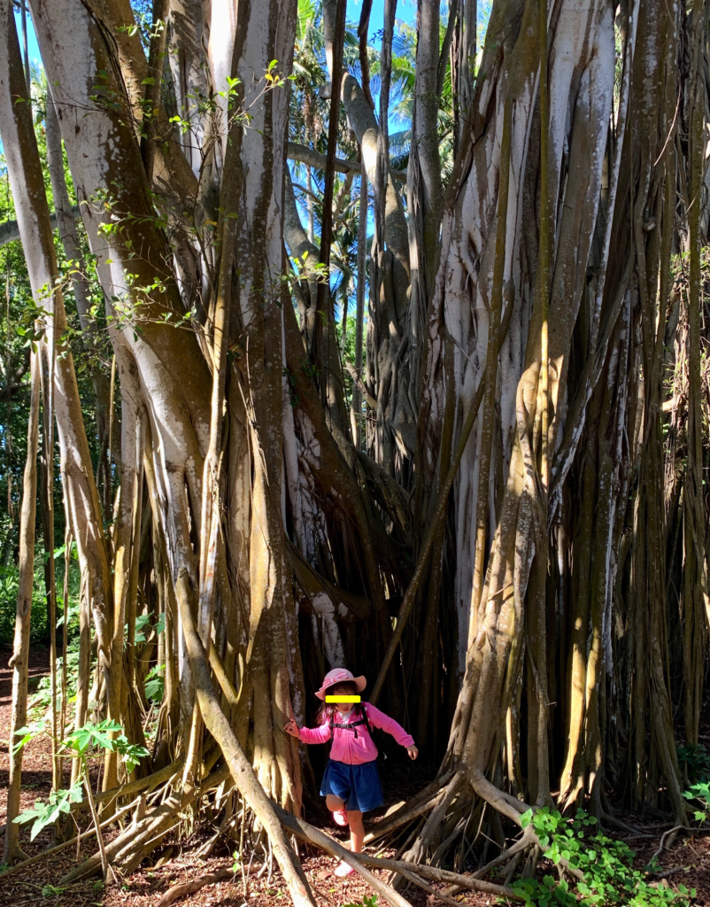 バニヤンツリーの中から出てくる娘