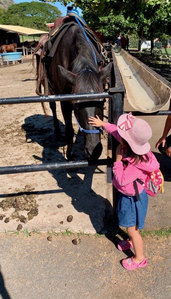 馬の顔を撫でる娘