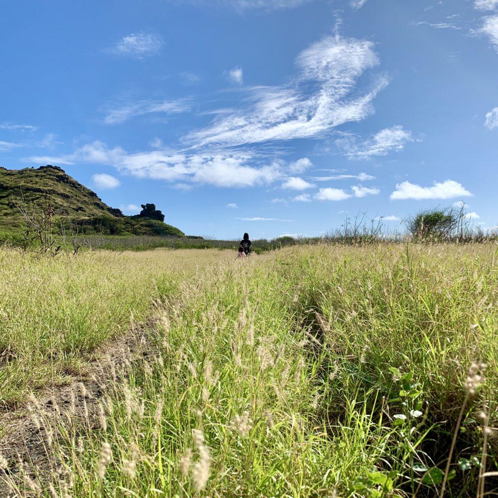 ペレの椅子が見える草原