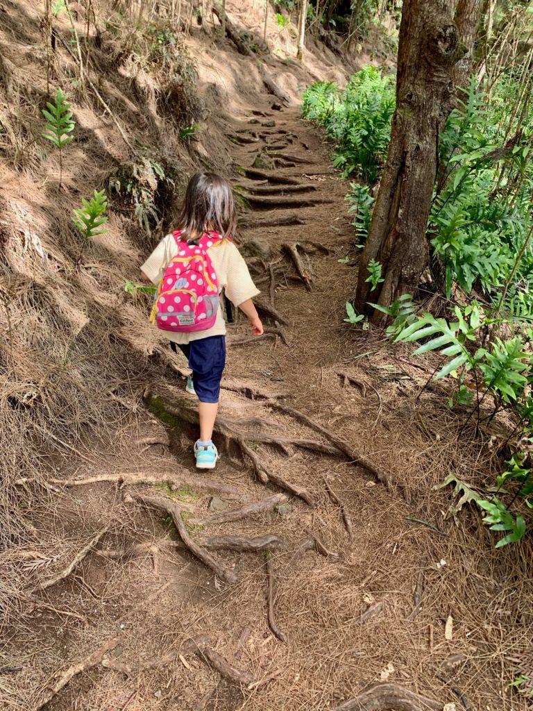松の道を歩く娘