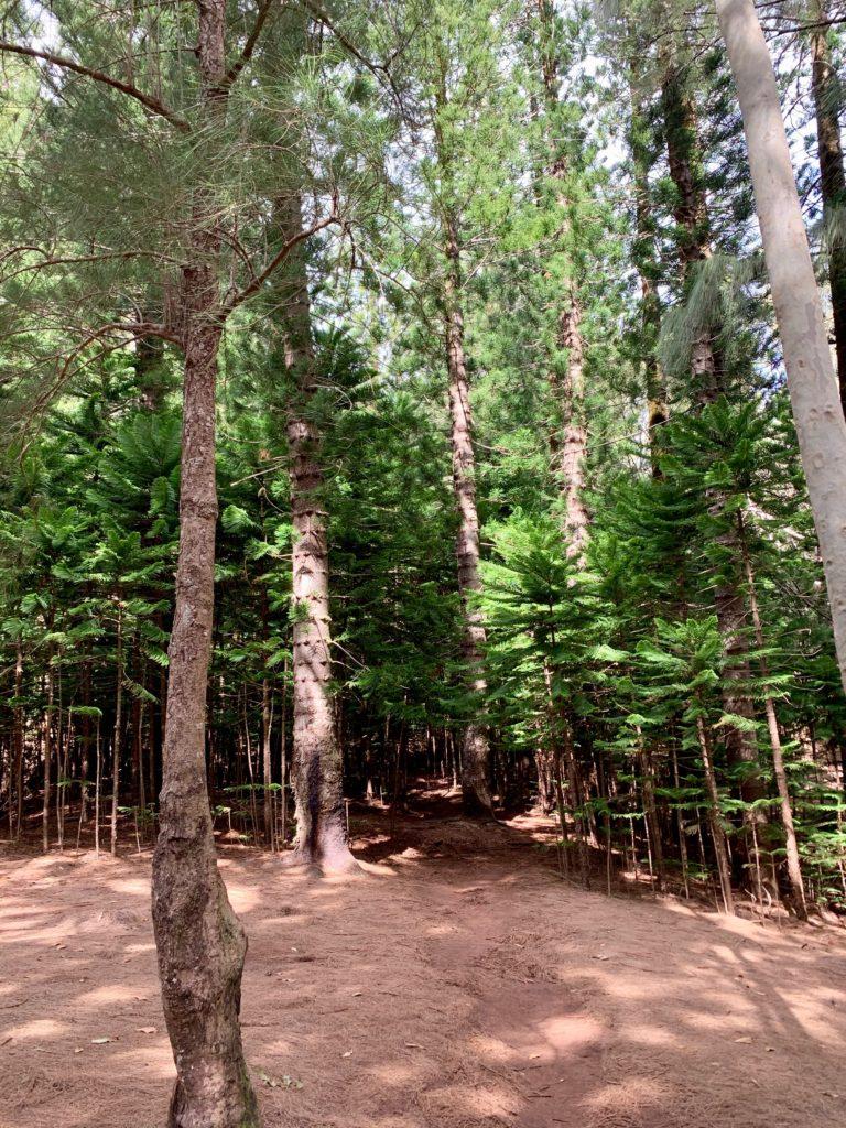 松から杉に変わるエリア