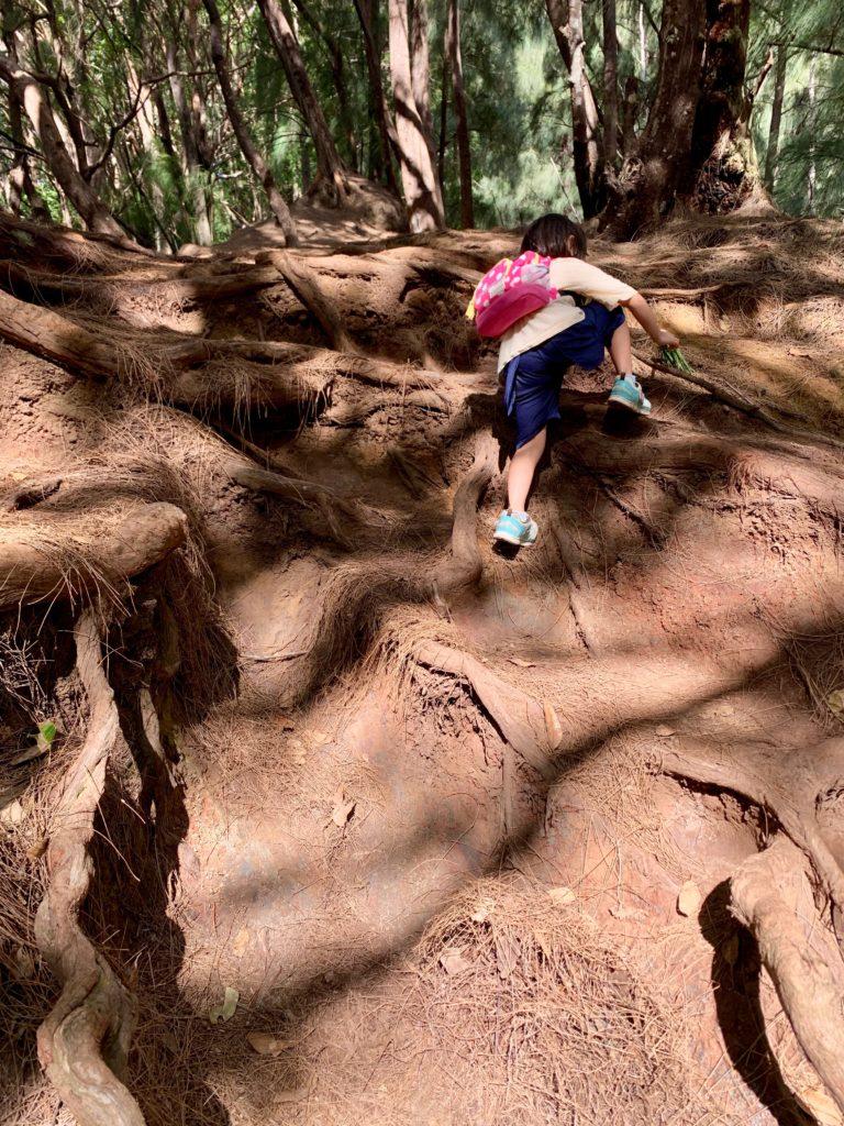 木の根の急斜面を登る娘