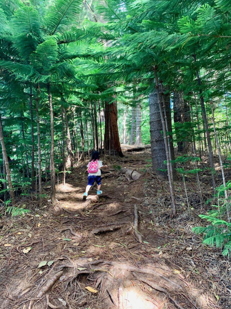 杉のトレイルロード