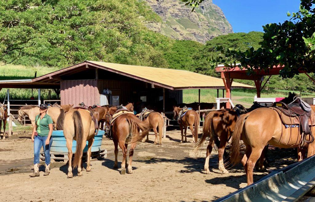 たくさんの馬