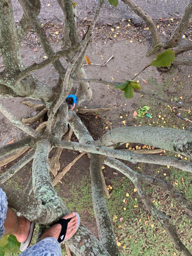 木に登った写真 下で娘も登っている
