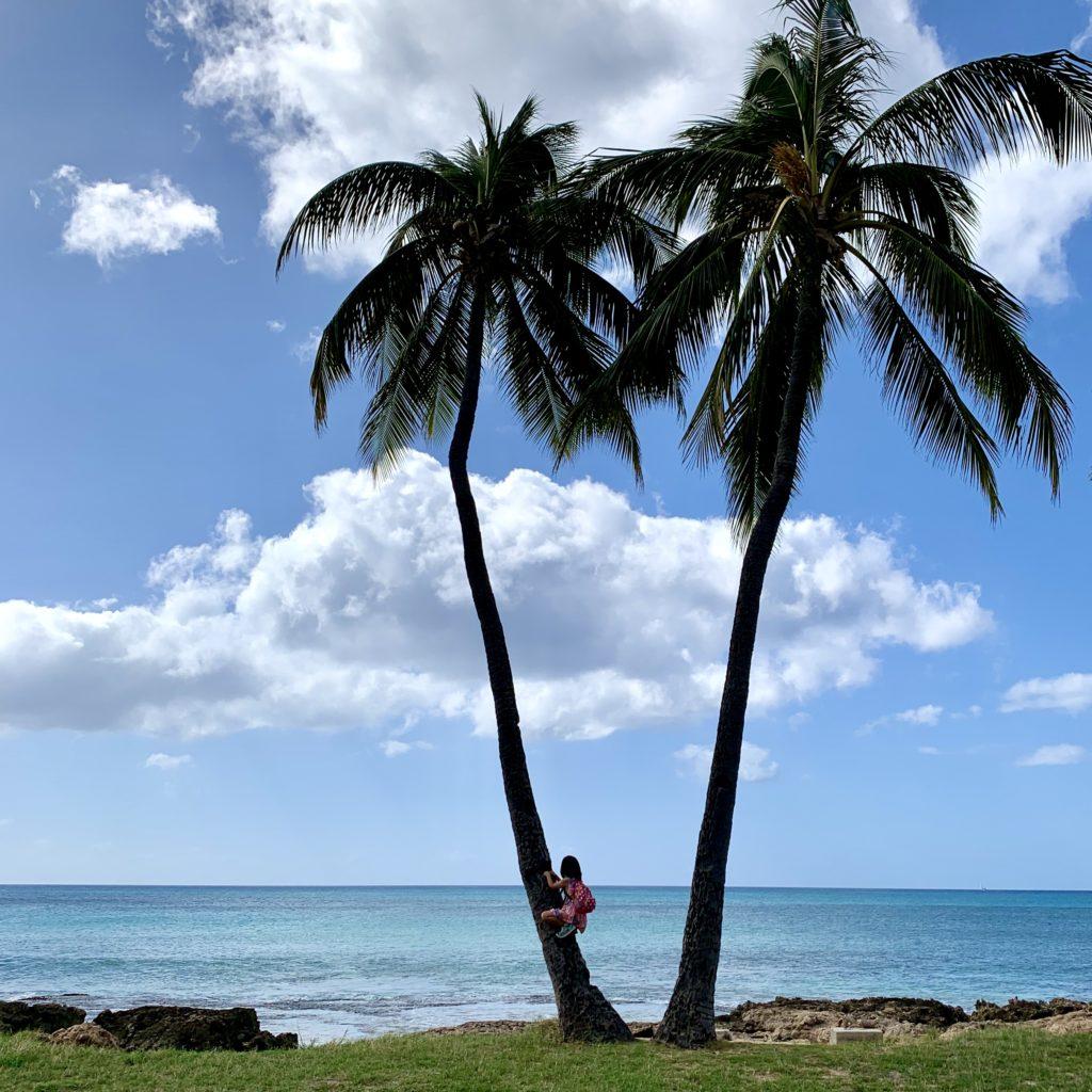 ヤシの木の登る娘
