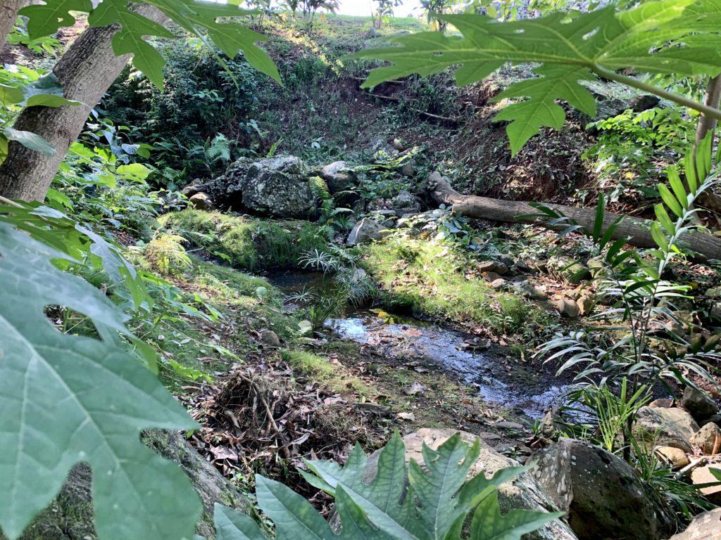 ヘイアウ横を流れる小川