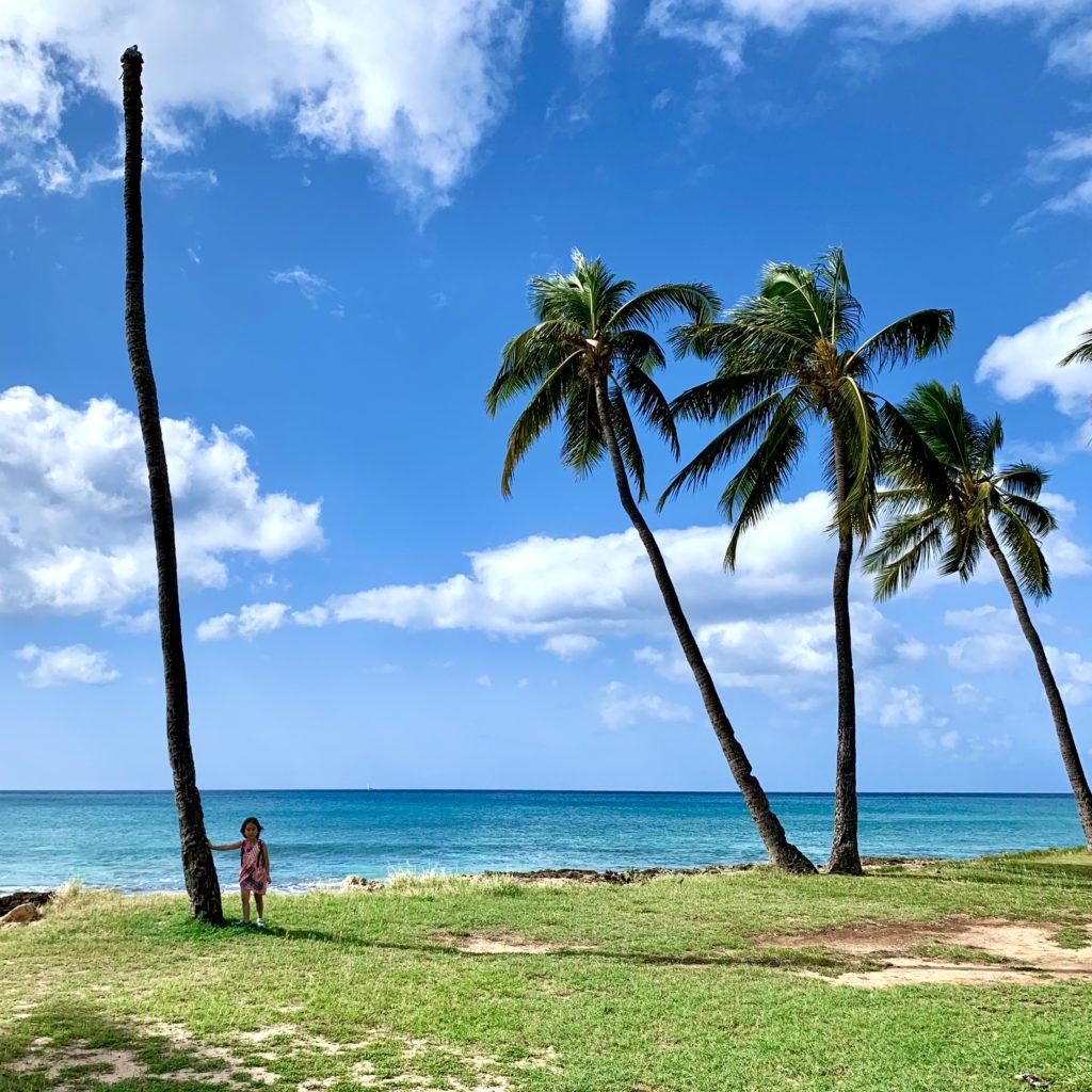 オアフ島西海岸にあったヘッドレスヤシの木