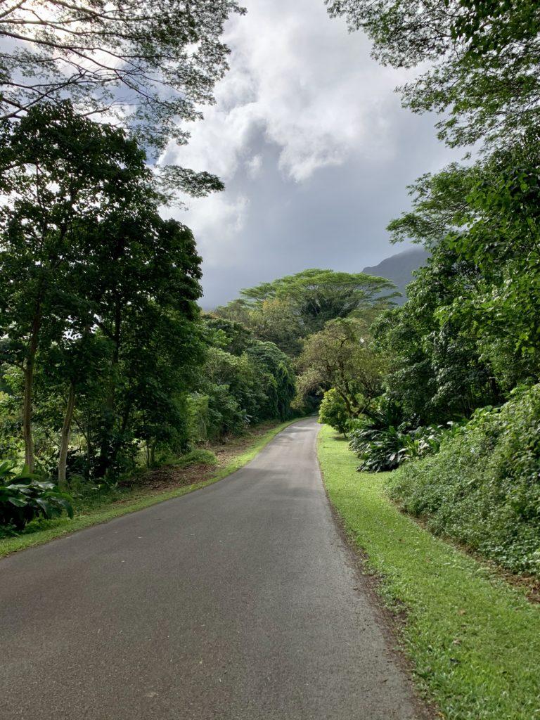 ホオマルヒアボタニカルガーデンの道