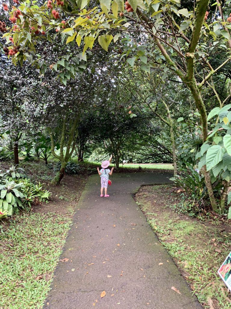 散歩道にある木のトンネル