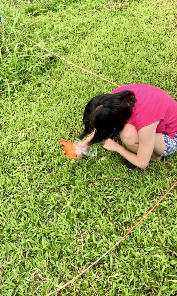 赤い魚をリリースしようと苦戦する妻