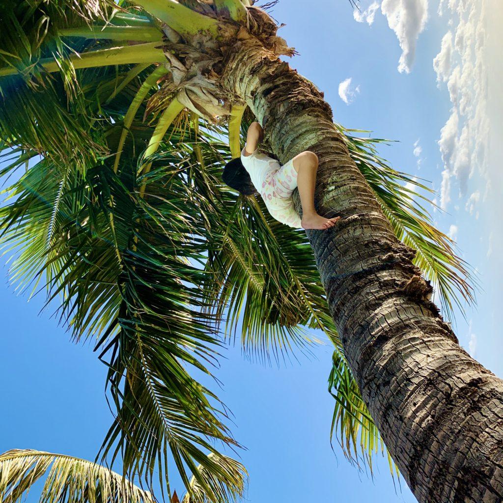 ヤシの木に登る娘