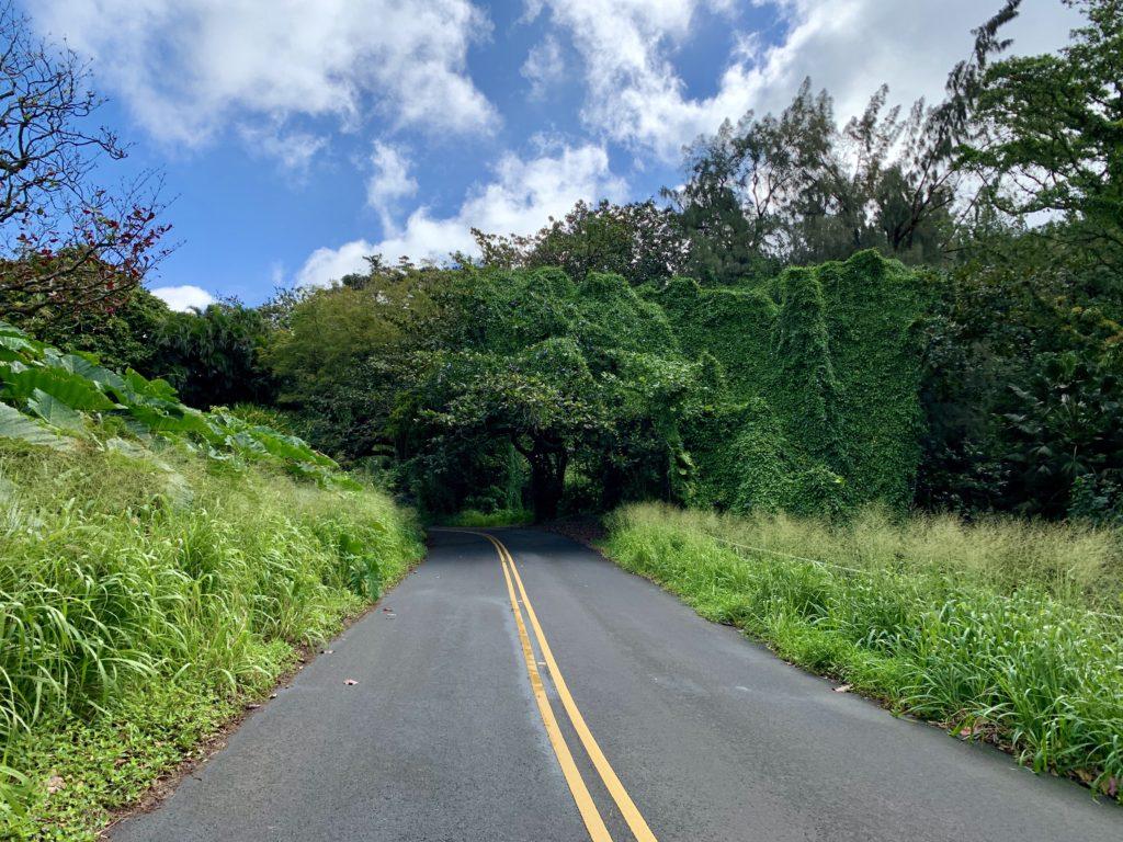 大きな木のトンネル入り口