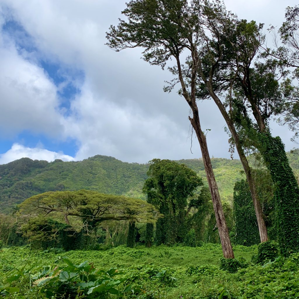 樹海の景色