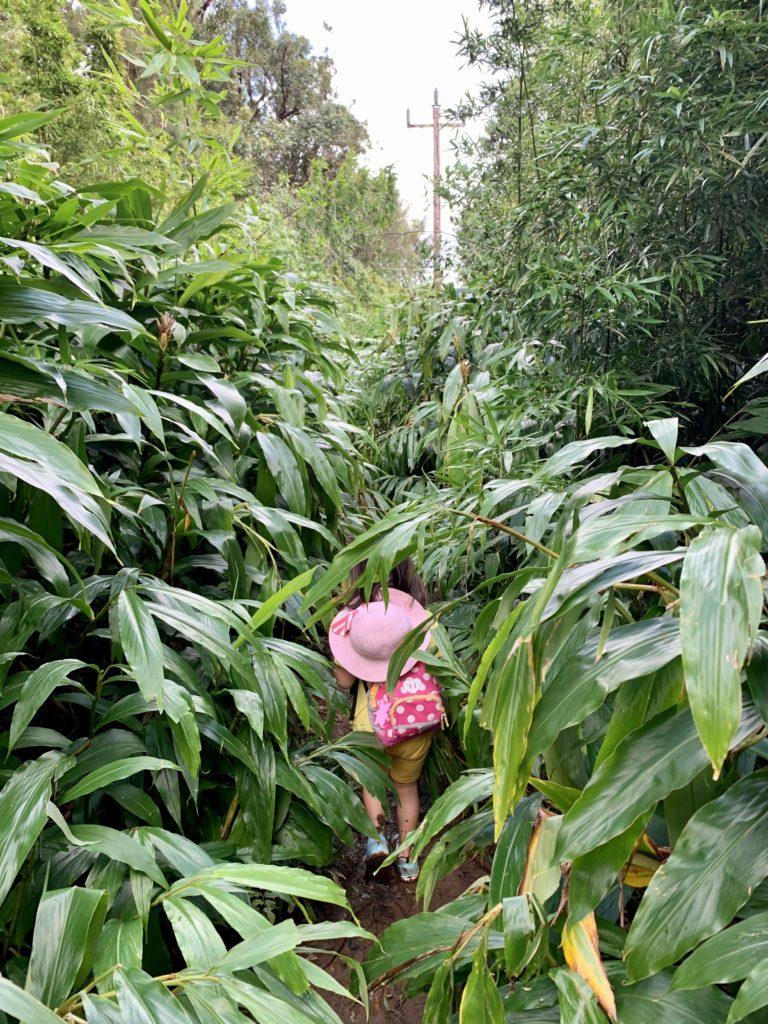 道が見えないほど生い茂った植物