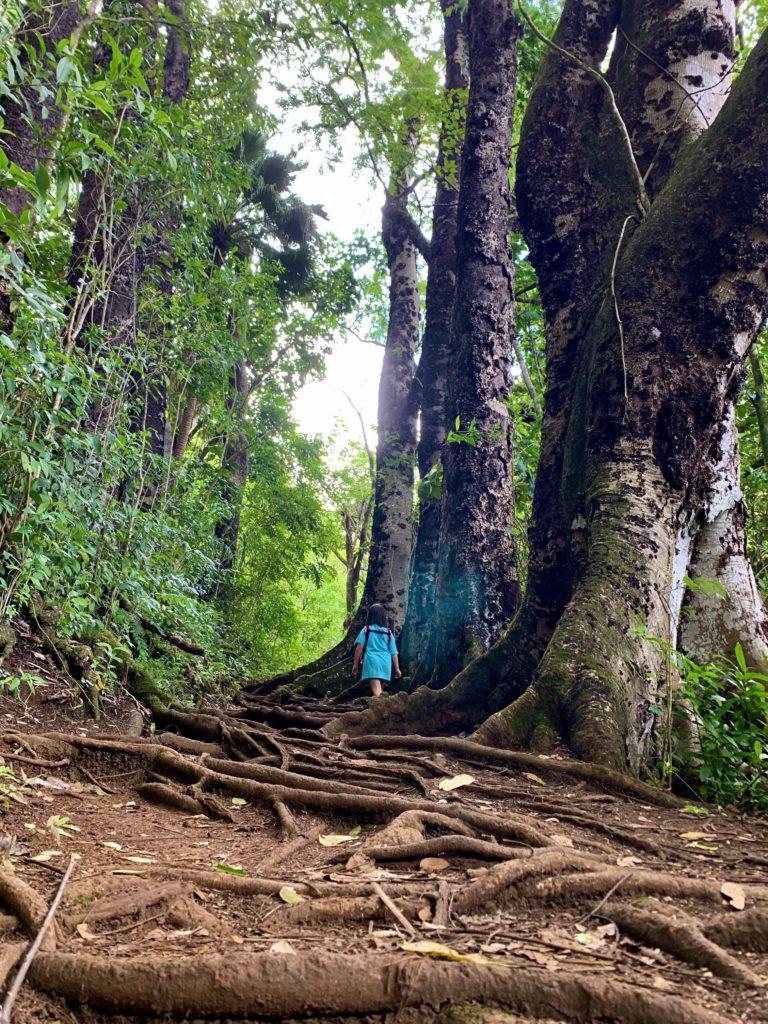 木の根の張り巡らされた道を歩く娘