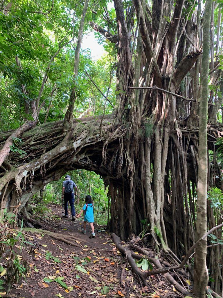 木のトンネルを通る娘