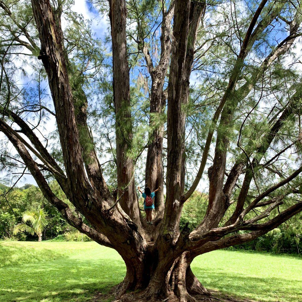 大樹に登る娘