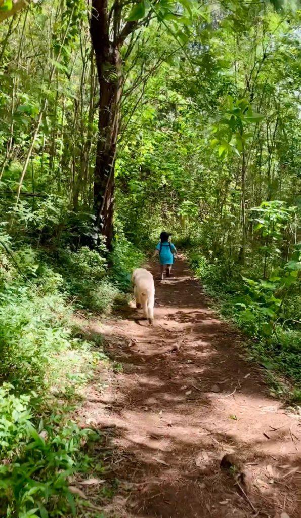 トレイルロードを走る娘のあとに続く白い犬