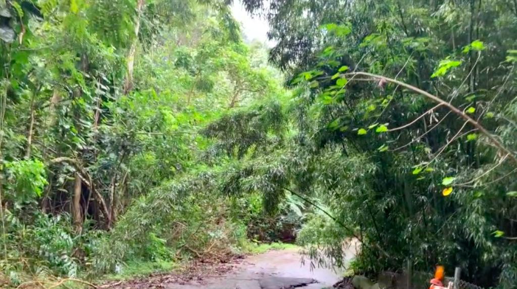 道に木が倒れ込んできている