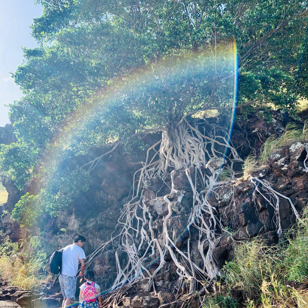 白くきれいな根が岩壁をそうように伸びている神秘的な木