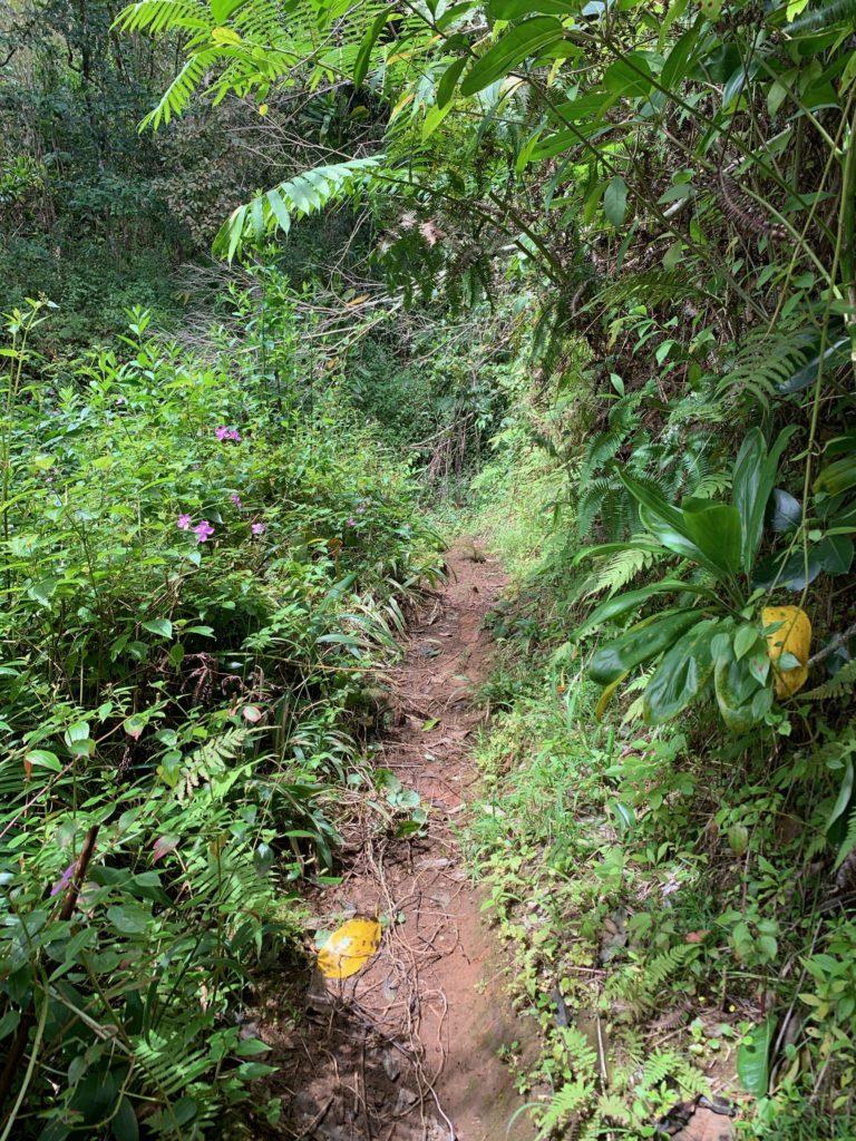 トレイルロード 幅は狭く植物が茂っているがフラットで比較的歩きやすい