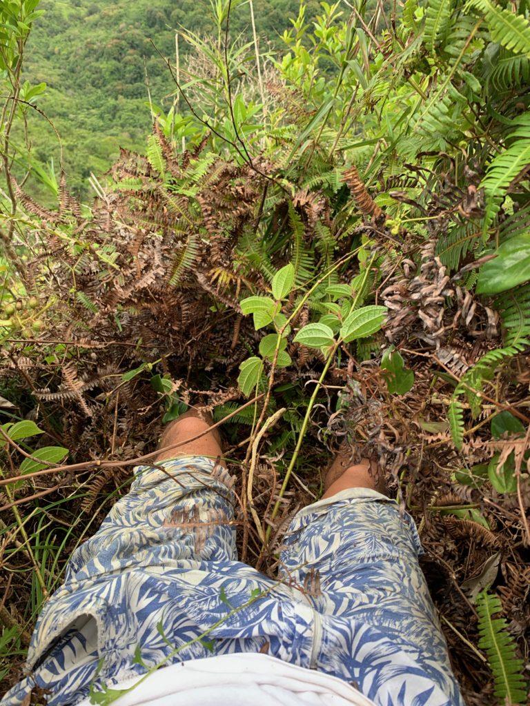 ひさまで完璧に植物に埋もれる私の足
