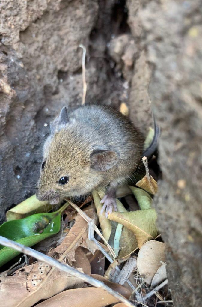 小さなネズミのドアップ写真