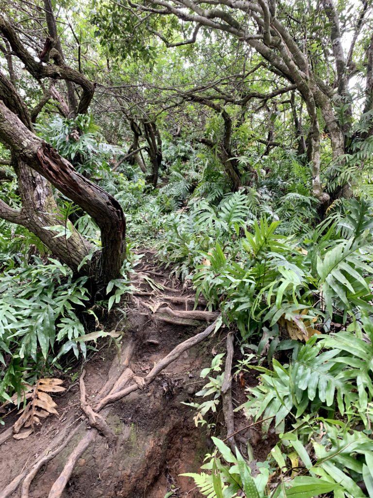 狭くて植物だらけ、かつ滑る道を進む