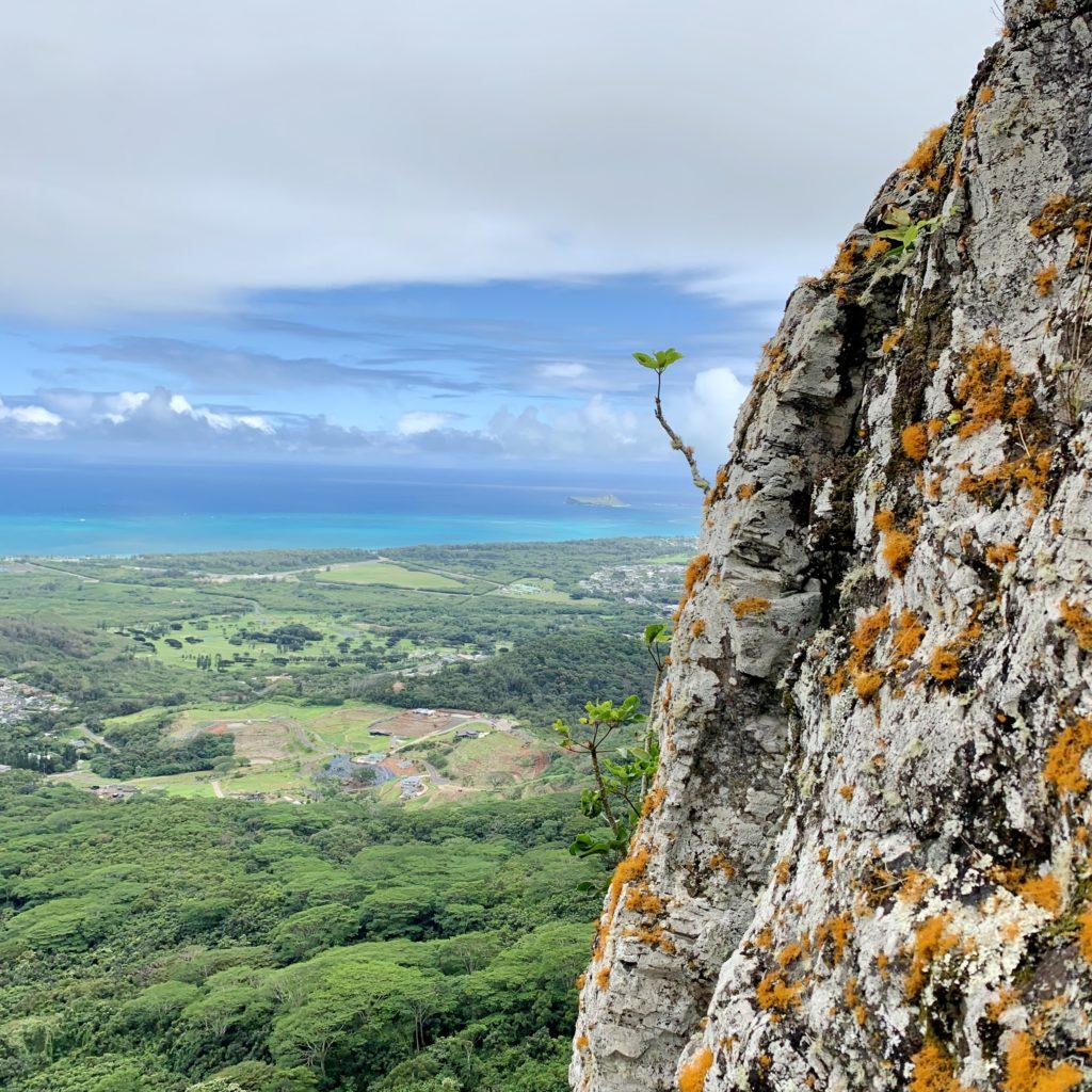 岩の生えたオレンジのトナカイ苔 背景の海がきれい