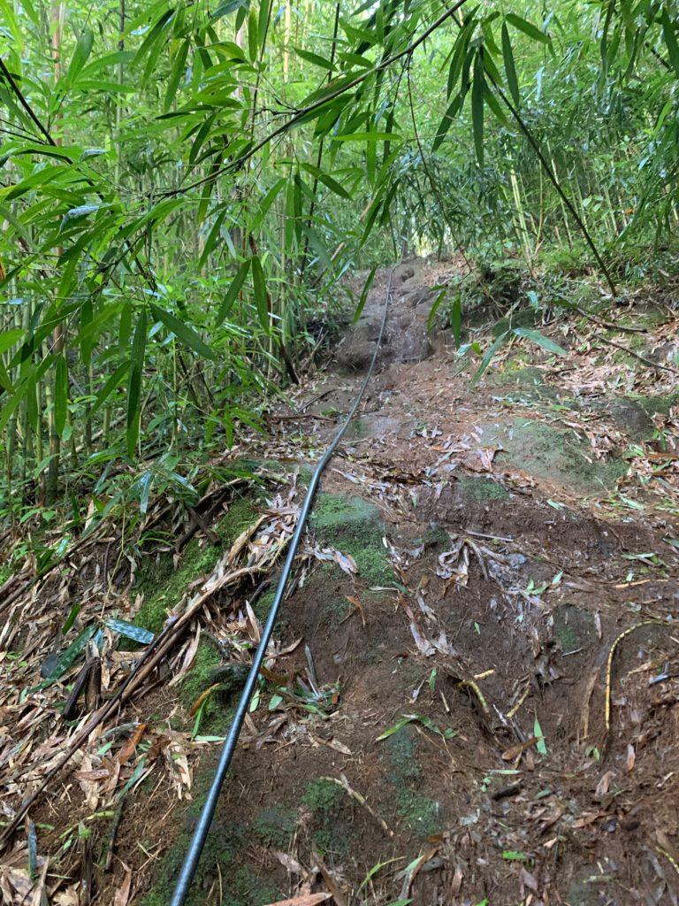 ロープがかけられた急勾配の竹林