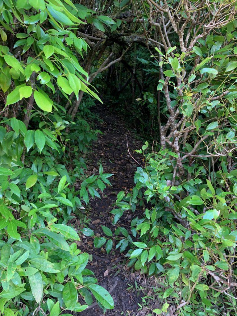 小さなトンネルのように植物に覆われているトレイルロード