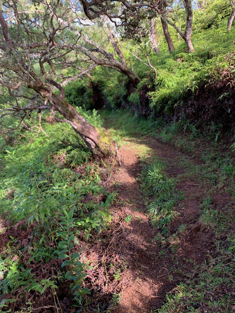 広く整備されているヌウアヌトレイルの道
