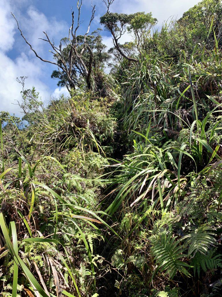 植物が茂りとても狭い道