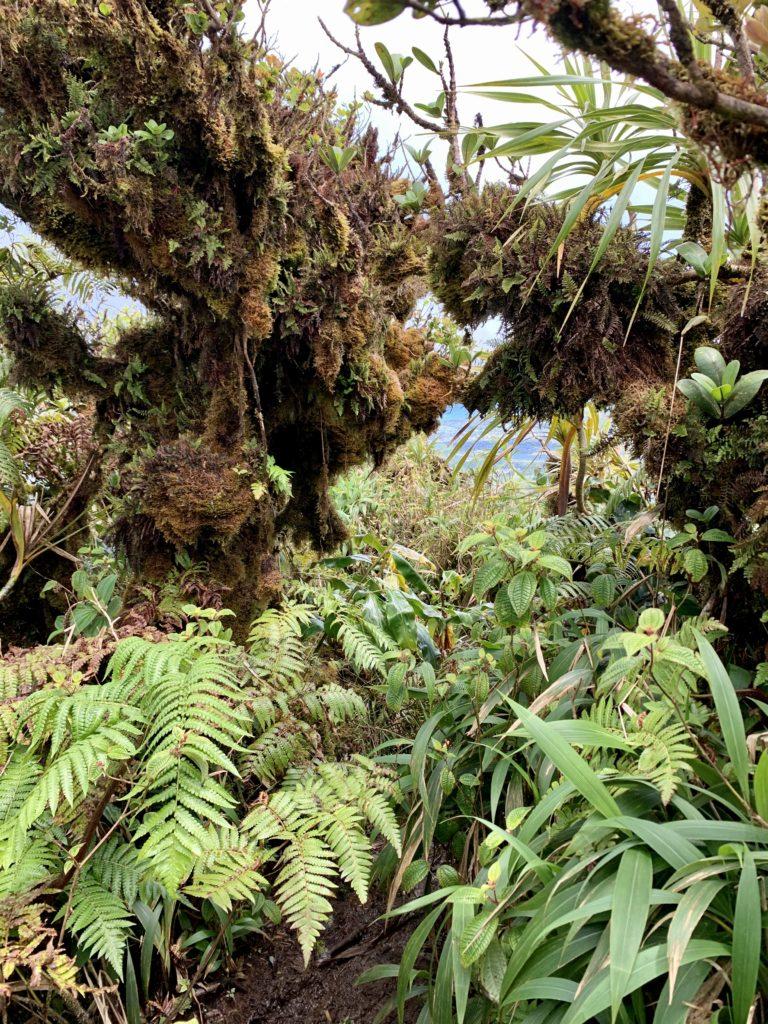 木が藻のようなもので覆われている