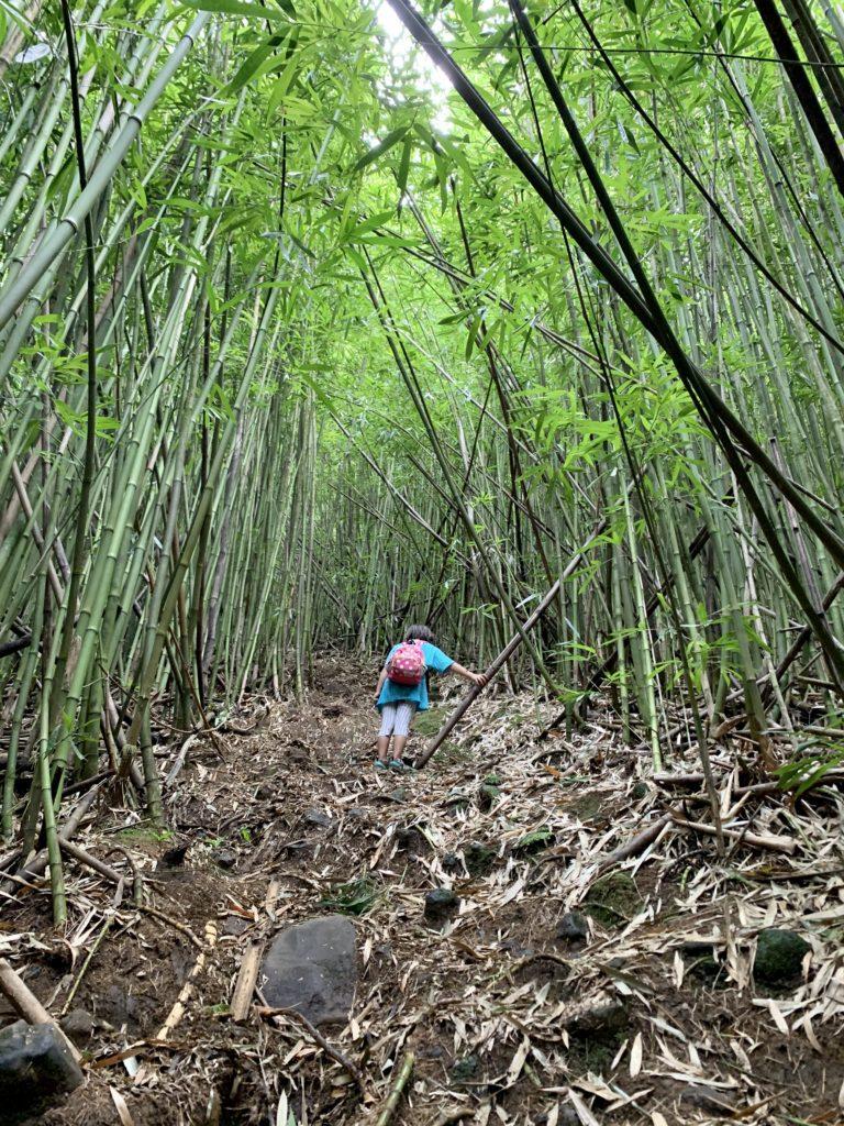 竹林を進む娘